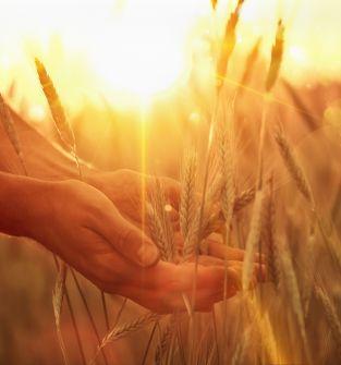 Zaopatrywanie gospodarstw w najwyższej jakości produkty niezbędne w hodowli zwierząt i uprawie roślin