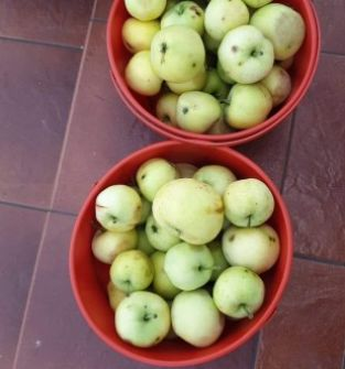 Jabłka papierówki