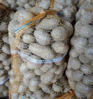 Ziemniaki jadalne odmiana Tajfun