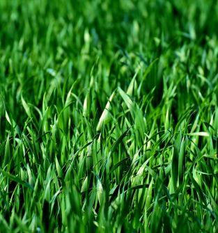 Oferowane produkty -   łąka na pniu o powierzchni 0,53 ha
