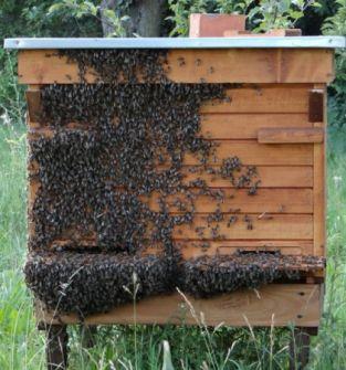 Sprzedam odkłady pszczele, 5 ramkowe.