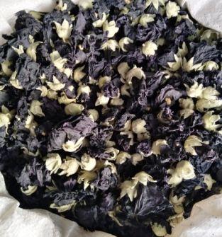 Susz kwiatu malwy czarnej
