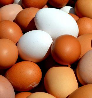 jajka z wolnego wybiegu 12 zł/mendel