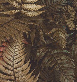 krzewy, rośliny ozdobne