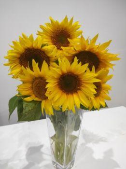 Słonecznik kwiaty