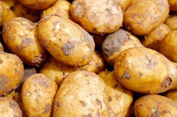 Ziemniaki paszowe- odpadowe