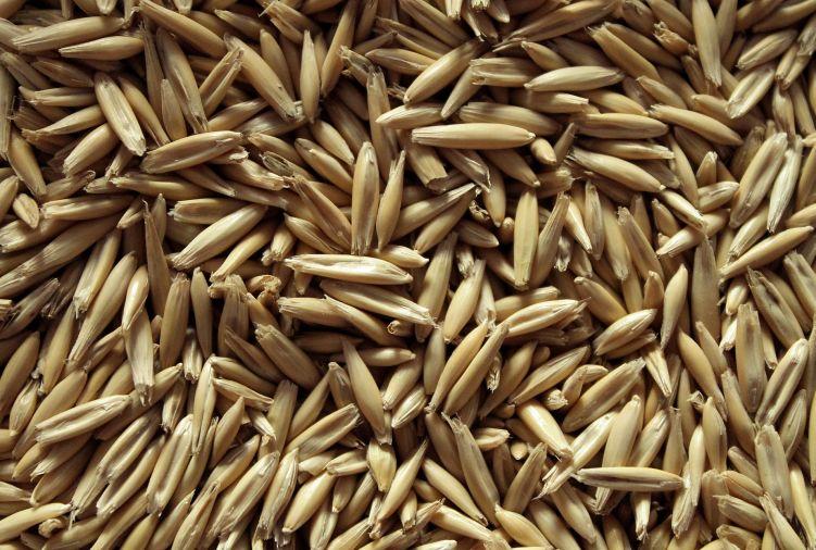 Zboże paszowe ( owies i pszenżyto)
